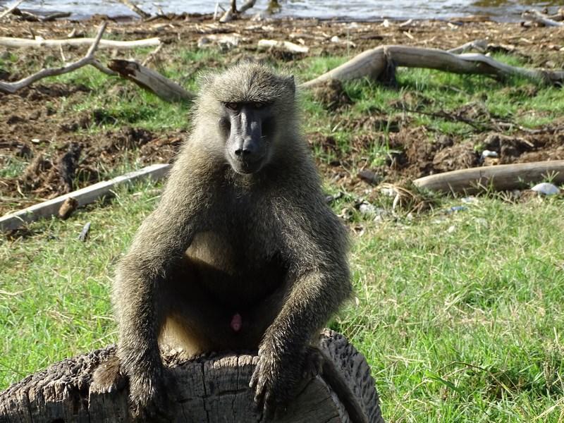 Maimuta Kenya