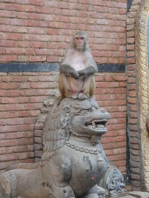 Maimuta pe statuie