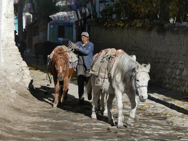 Cai tibetani