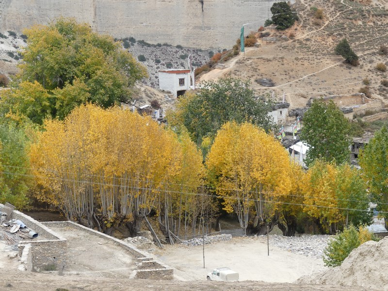 Toamna in Mustang
