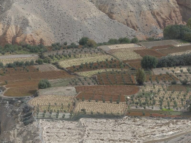 Campuri agricole