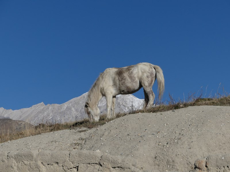 Cal tibetan