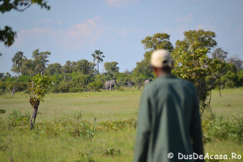 . safari pe jos