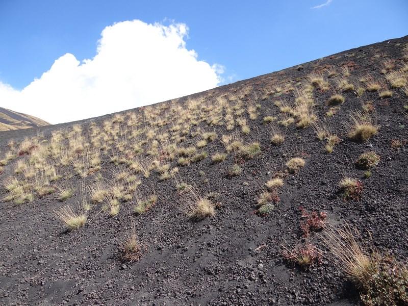 Vegetatie pe Etna