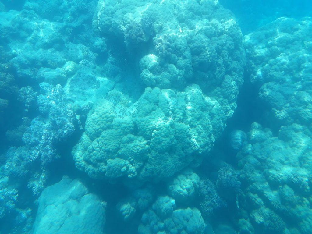 Corali Australia