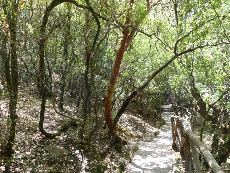 Valea Fluturilor