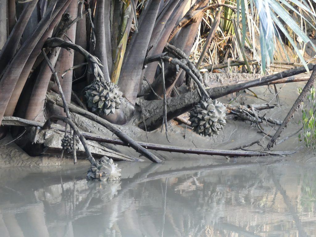 Sundarbans Bangladesh