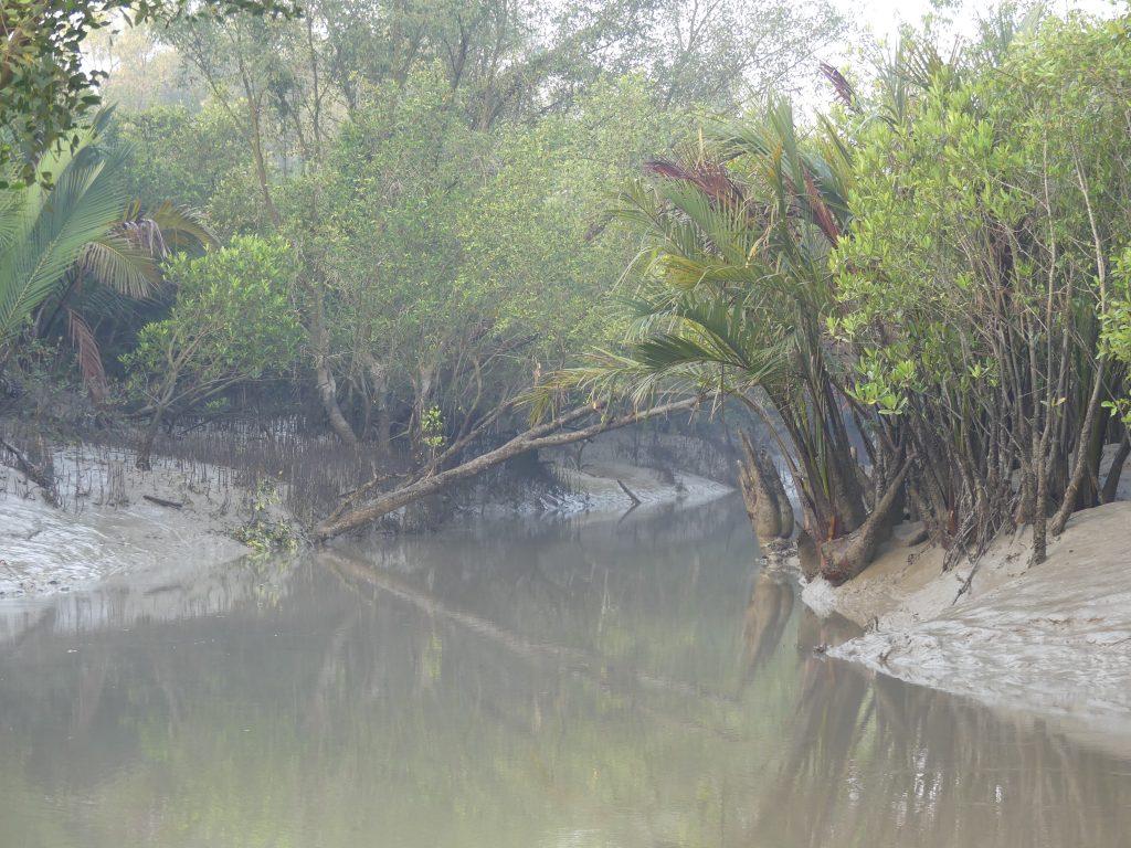 Canale Sundarbans