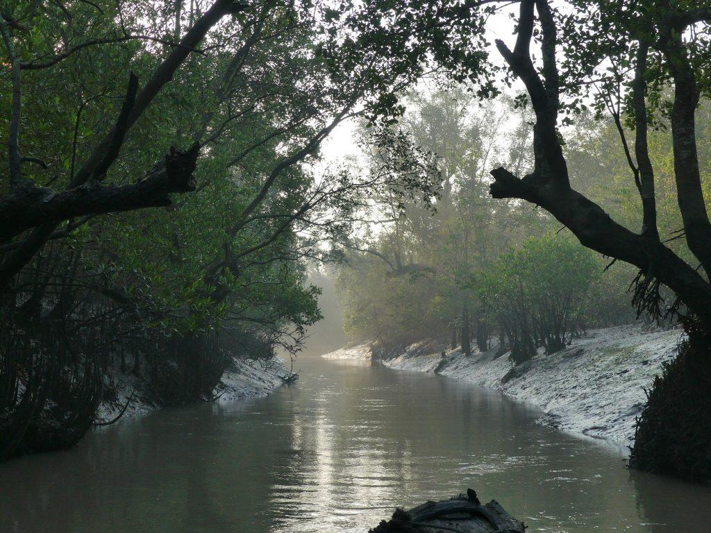 Sundarbans dimineata