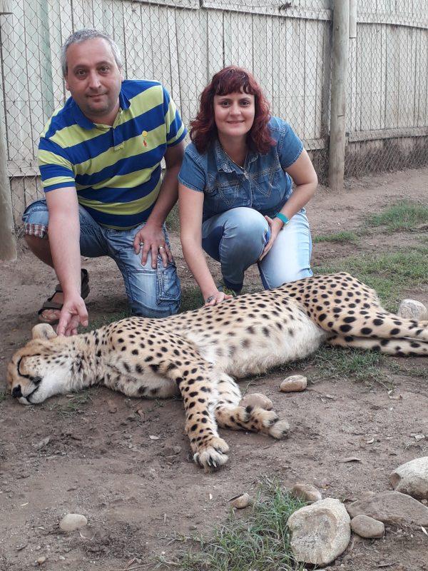 Cango wildlife park mangaind ghepardul