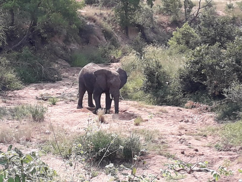 . Elefant