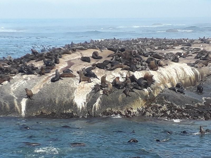 Insula Focilor Cape Town