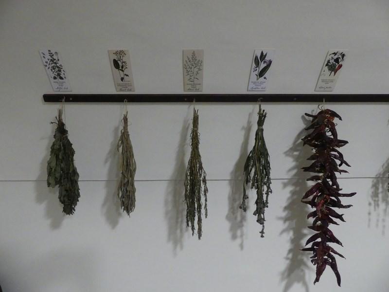 Plante medicinale Oradea