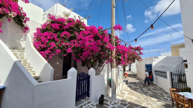 Prodomos insula Paros