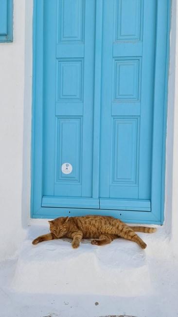 Pisica Grecia
