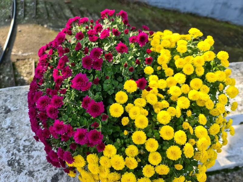 Flori rosu galben