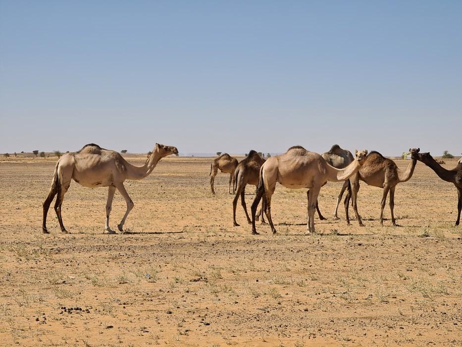 Camile Sudan