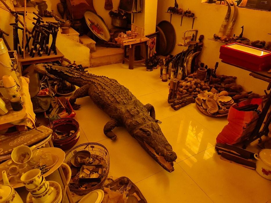 Crocodil impaiat