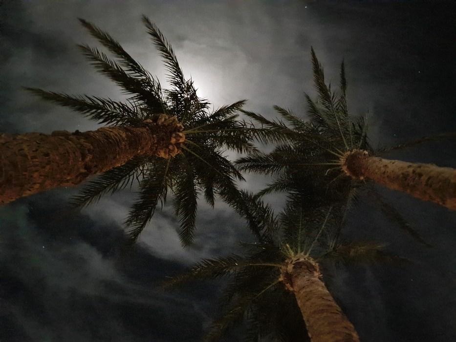 Palmieri sub luna