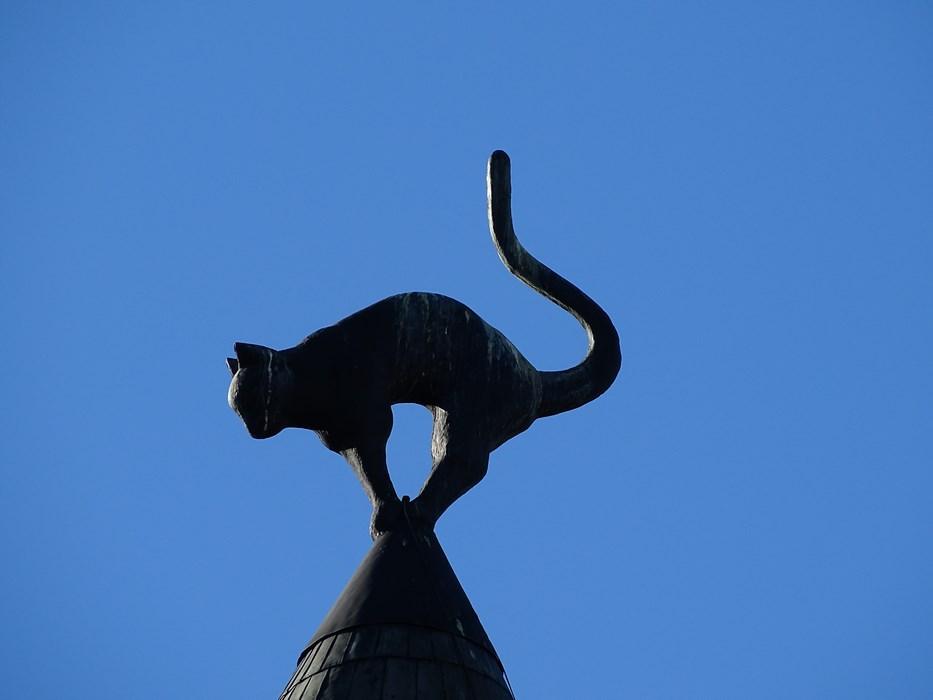 Pisica din Riga