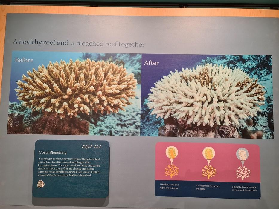 Corali Maldive