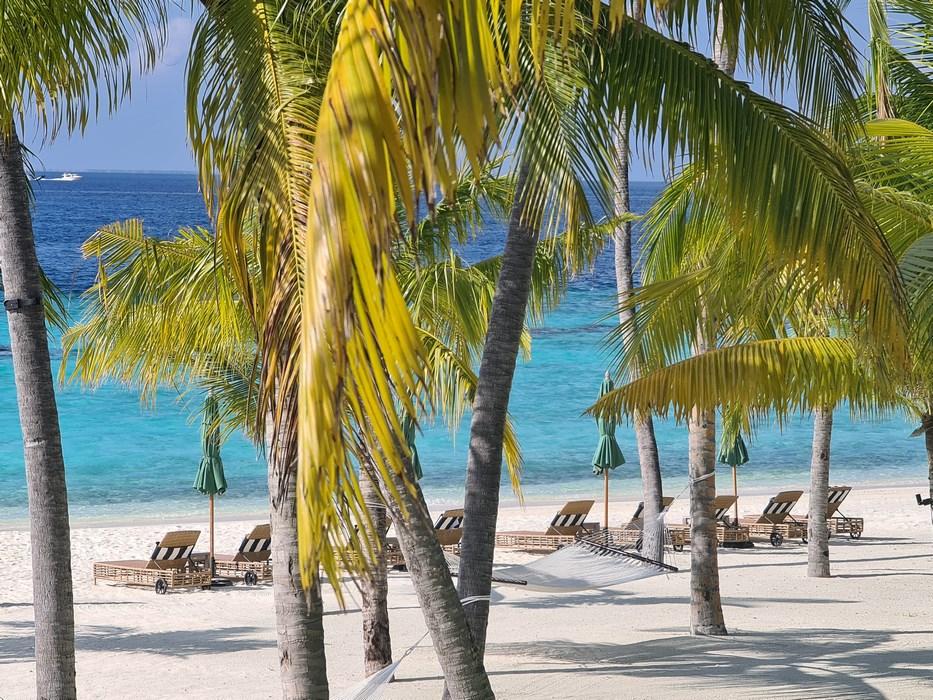 Palmieri pe plaja