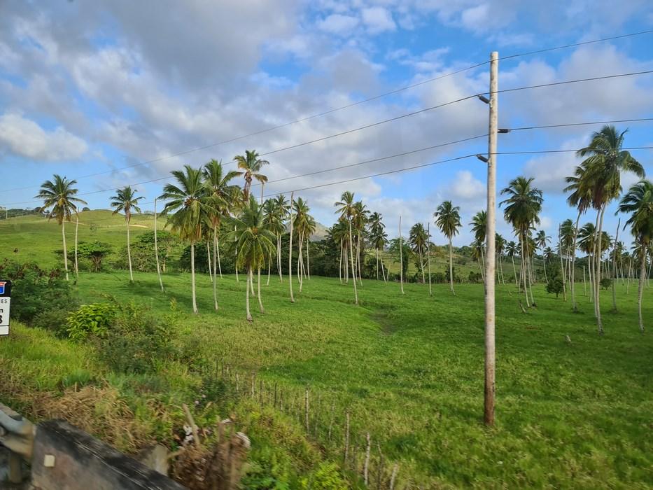 Camp in Republica Dominicana