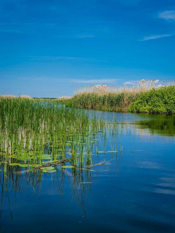 . Culori asortate în Delta Dunării