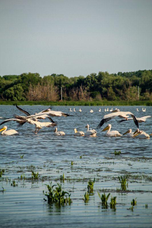 . Hello Delta Dunării