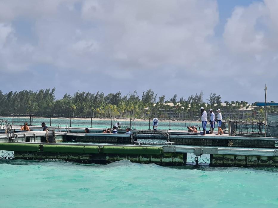 Dolphin Island Punta Cana