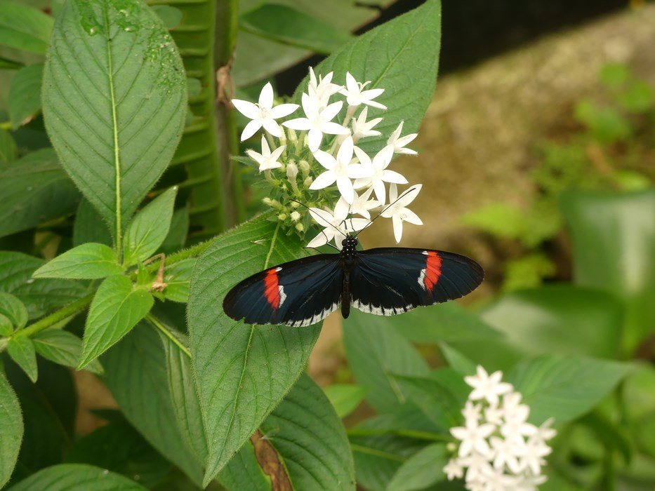 Fluturi Ecuador