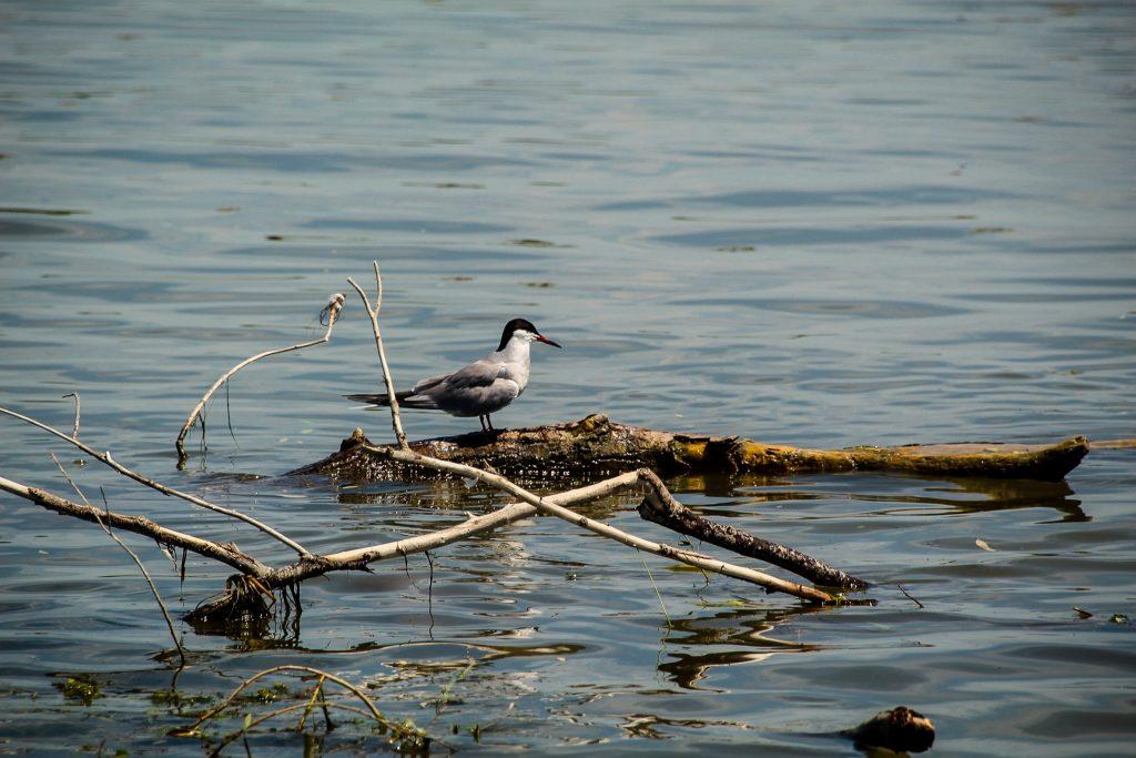 Fauna din Delta Dunării