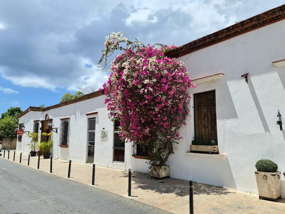 Flori Santo Domingo