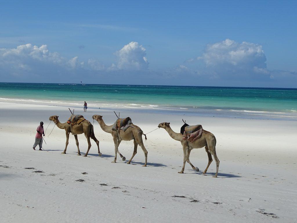 Camile pe plaja