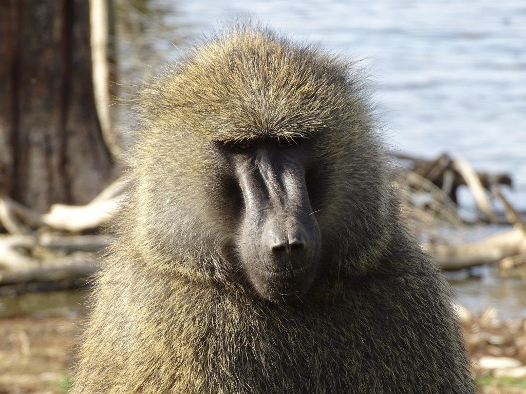 Maimuta Nakuru