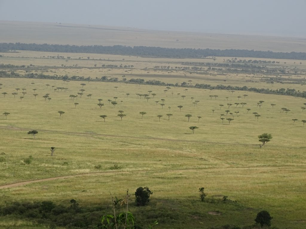Campia Masai Mara