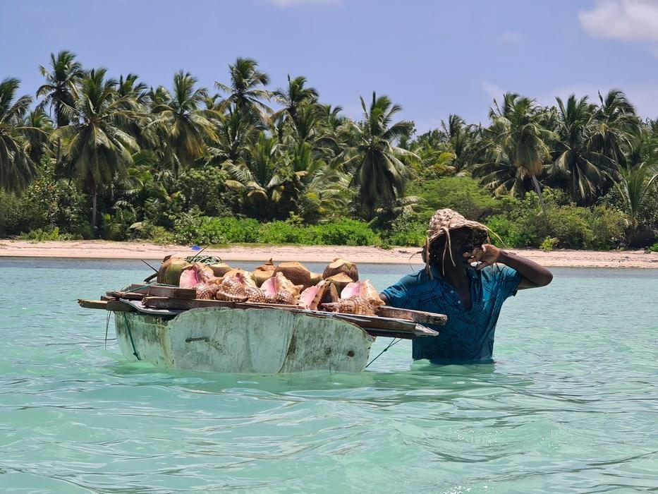 Nuci de cocos