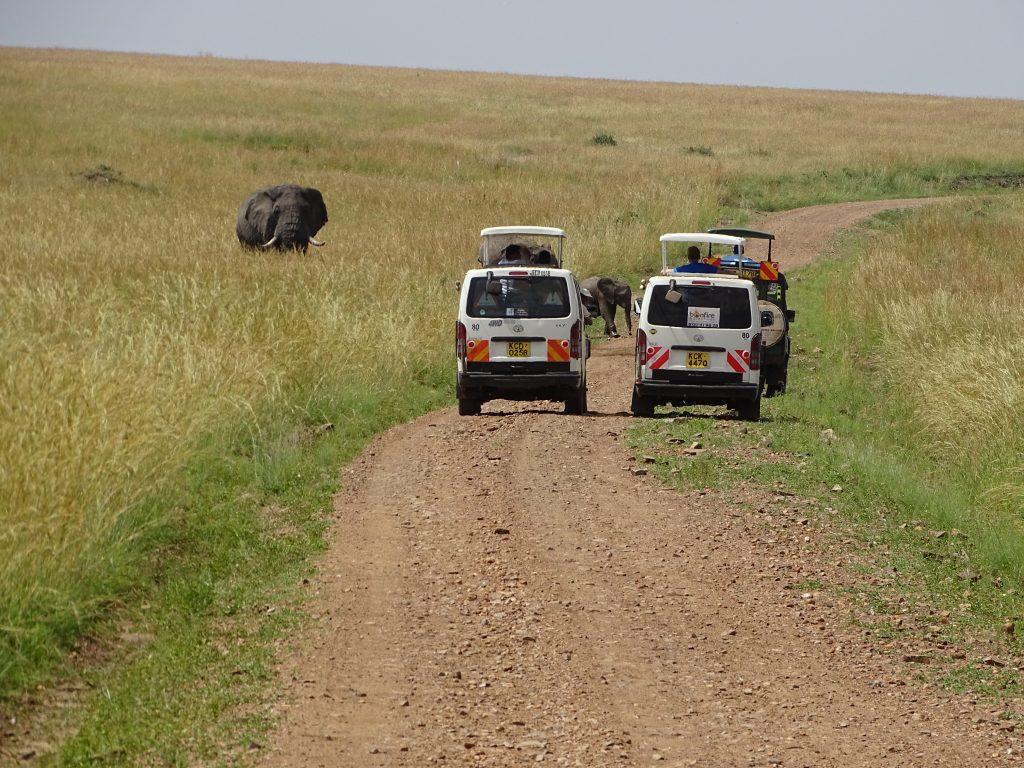 Elefant la trecere de pietoni