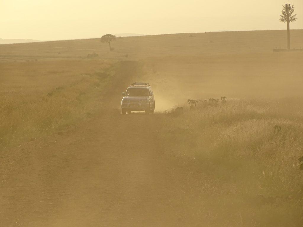 Apus Masai Mara