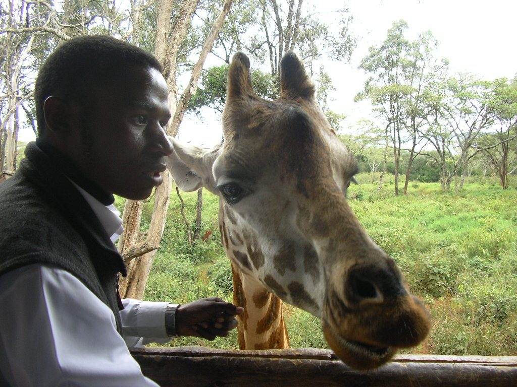 Mangai o girafa