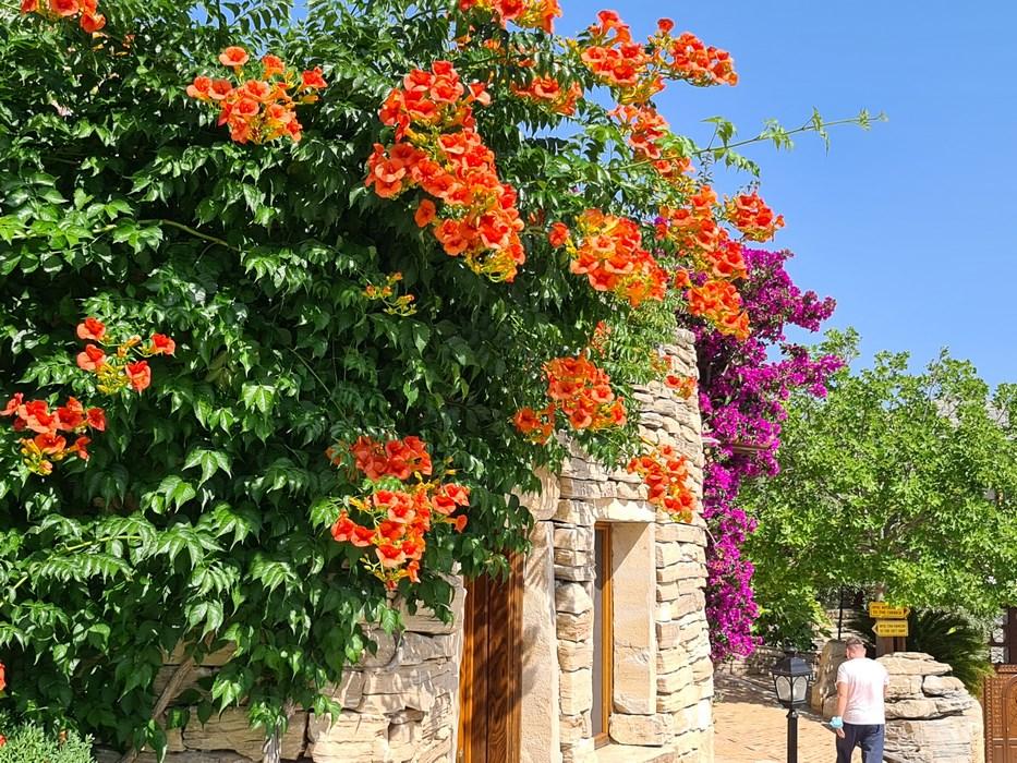 Flori in Thasos