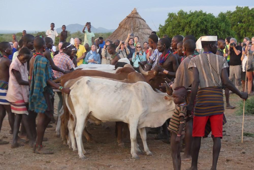 Ceremonia de sarit peste vaci