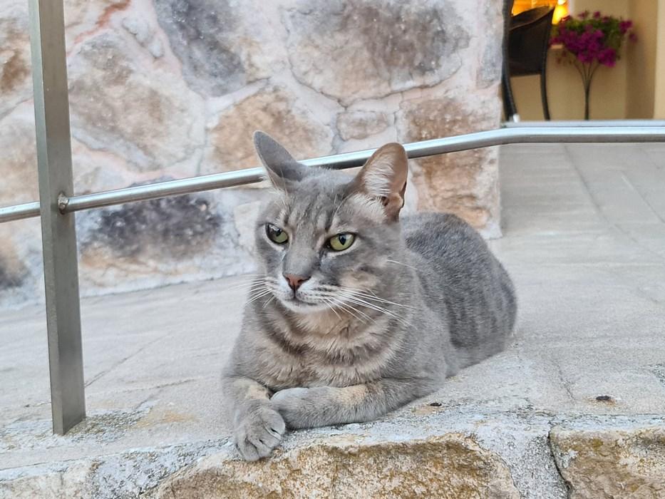Pisica hotelului