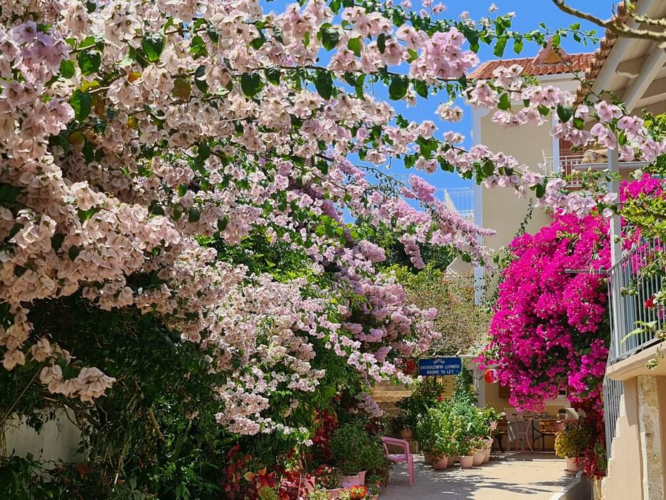Flori Grecia